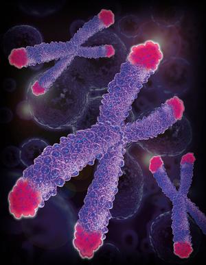 chute globules blancs cancer