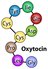 oxytocin_illustration
